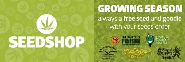 marihuána cannabis kendermag mag rendelés online az internetről webshop bolt order
